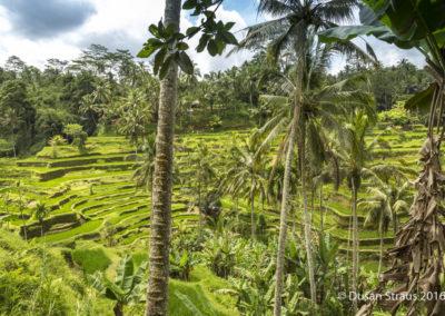 Dusan_STRAUS_Bali-9